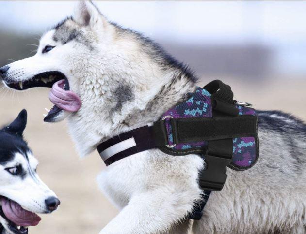 Bolux Harness for Huskies