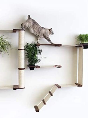 cat tree on wall
