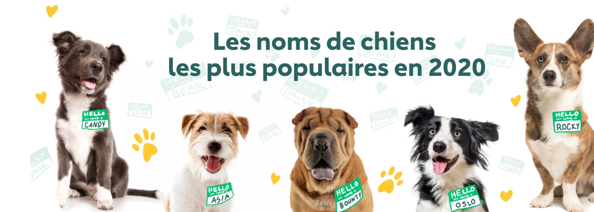 noms de chien populaires