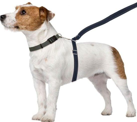 ThunderLeash Nylon Dog Leash