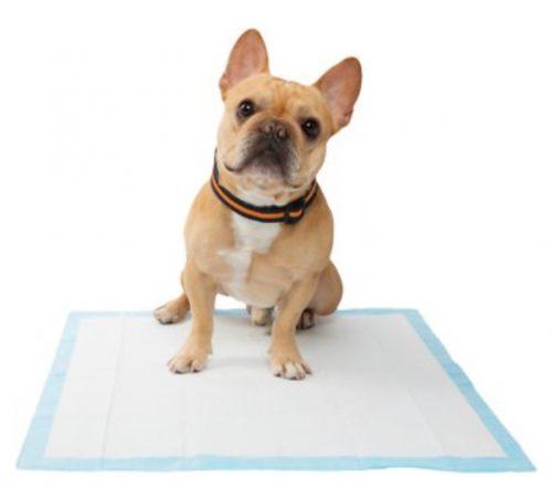 A french bulldog on a Frisco Training & Potty Pads