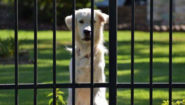 dog behind gate