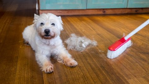 dog next to hair removal tool for cleaning