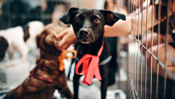 A black dog next to a puppy playpen