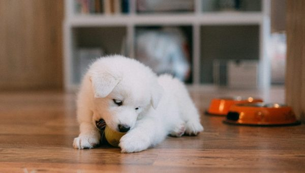 New Puppy Checklist cover image