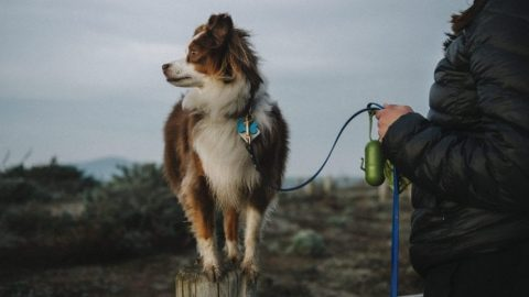 Dog on leash in thunder