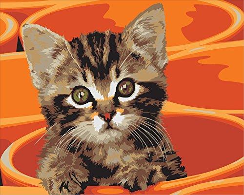 kitten on orange background