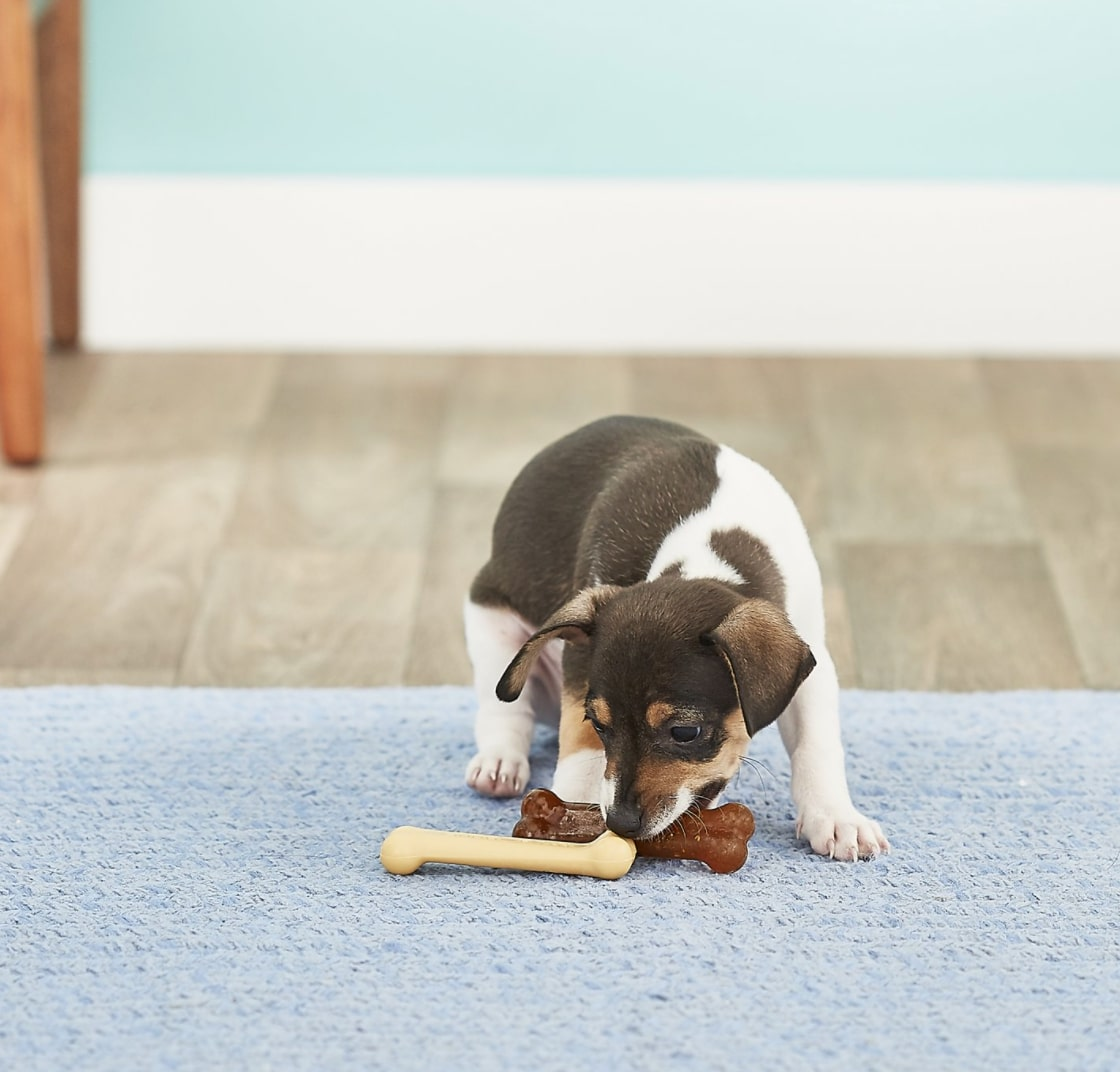 Nylabone Puppy Chew