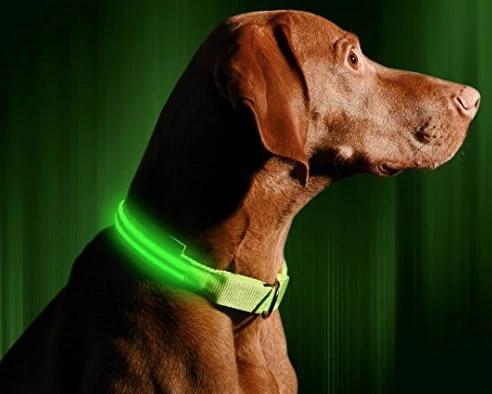 Illumiseen glowing collar
