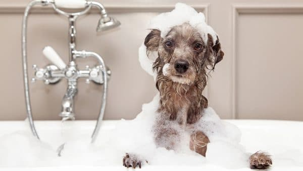puppy in shampoo