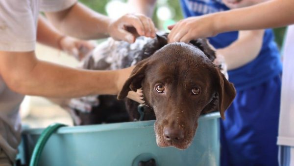 dog in tub with shampoo for skin allergies