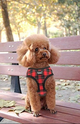 pup wearing black and red plaid harness