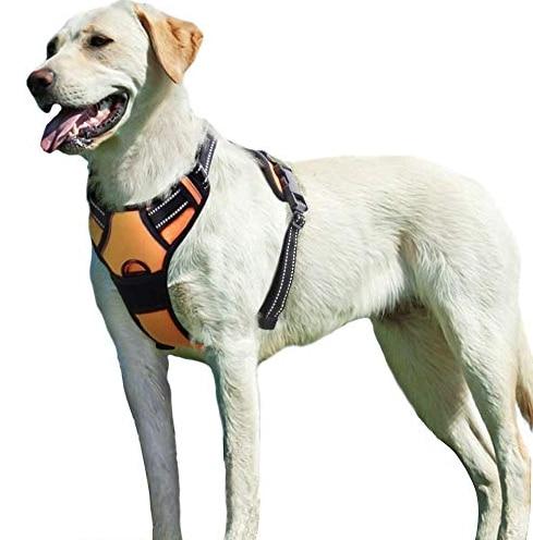 dog wearing orange harness