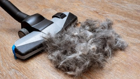 upright vacuum tackling a giant pile of pet hair