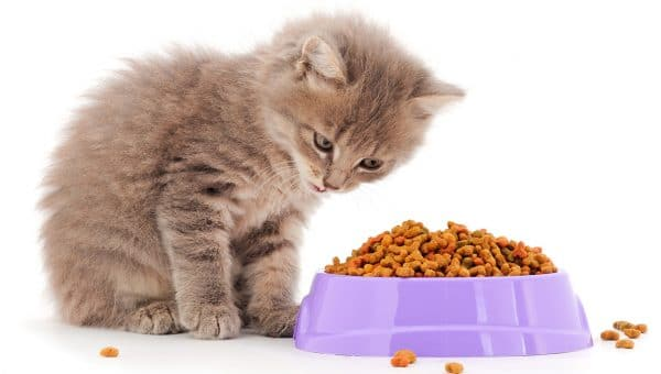 kitten with bowl of dry food