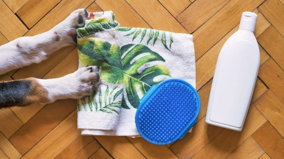 dog paws with wash products