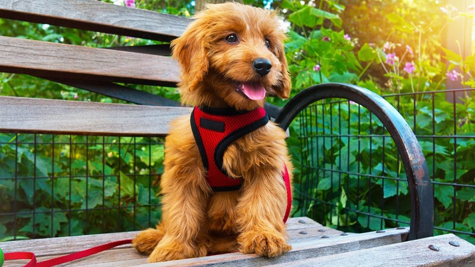 puppy in harness sitting on bench