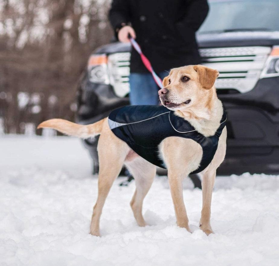 Kurgo Waterproof Dog Jacket