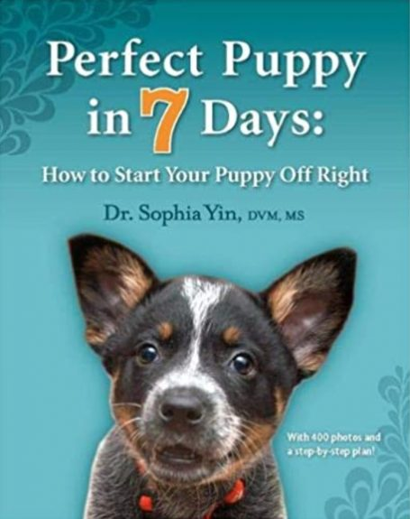 The perfect puppy in 7 days: how to start your puppy correctly