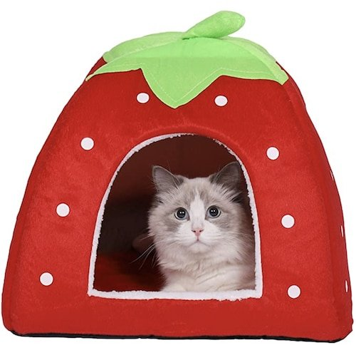 cat in strawberry shaped bed