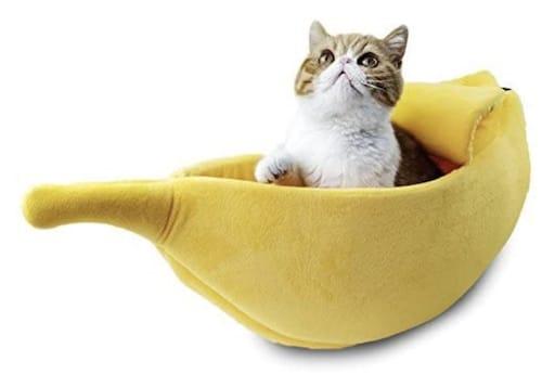 cat in banana bed