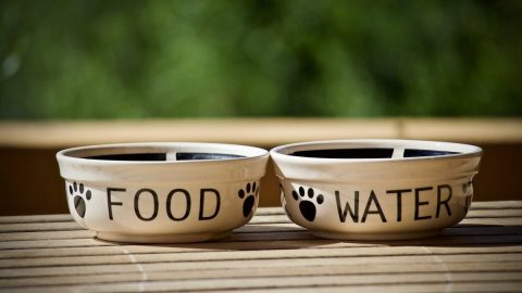 pair of dog bowls