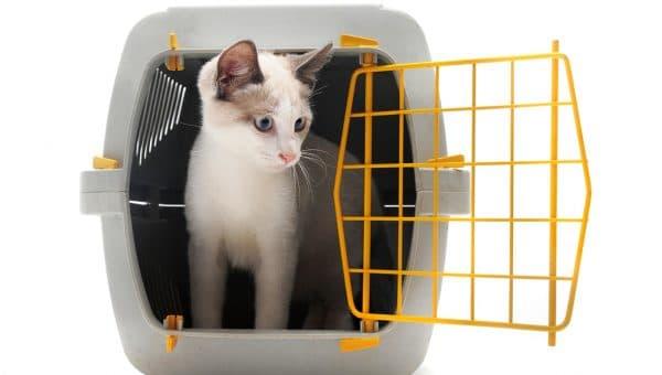 cat standing in carrier