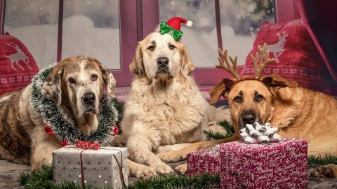 Gifts for dog lovers and their dogs