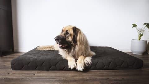 dog cooling on bed
