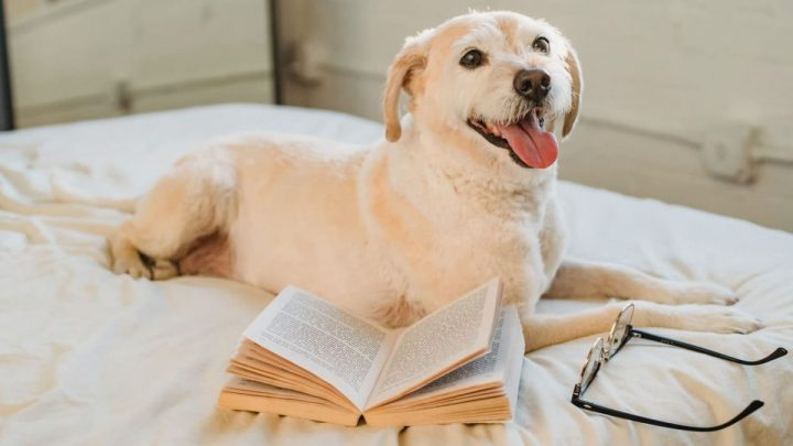 dog on bed with training book and glasses