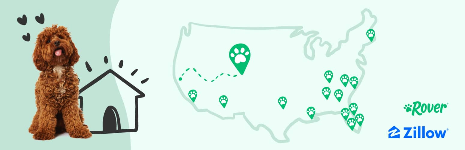 Rover & Zillow's Top Emerging Dog-Friendly Cities for 2021