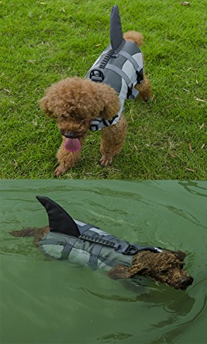 dog in A-More shark fin life jacket