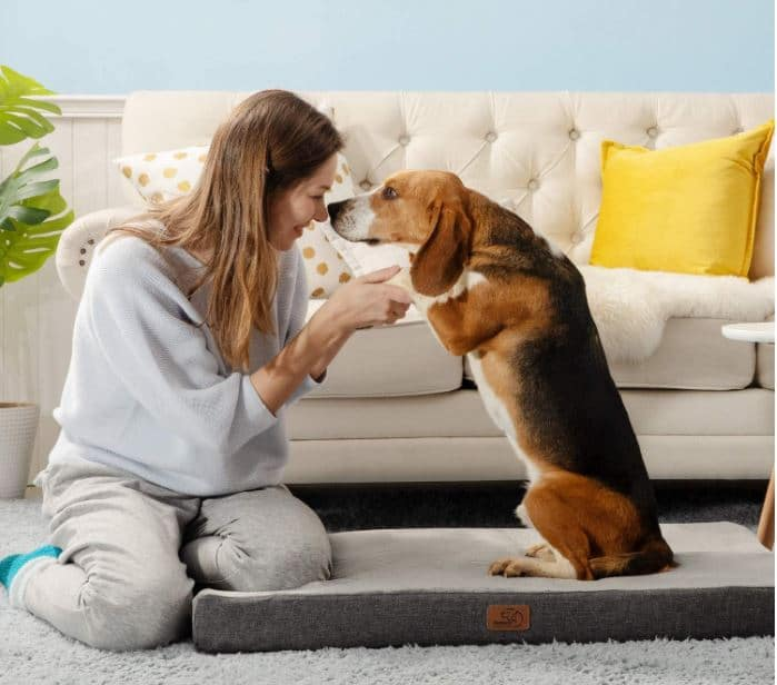 The Best Dog Beds on Amazon -- BEDSURE