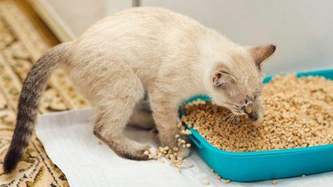 kitten digging in cat litter