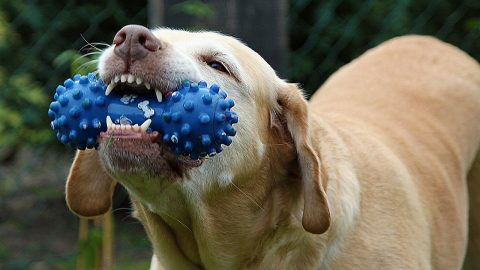 Best Chews cover image