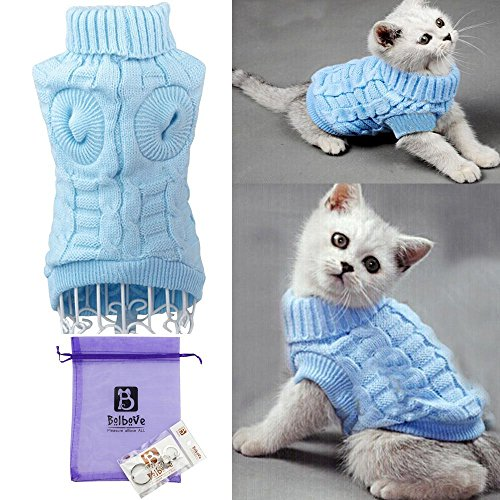 Kitten in pastel blue cable sweater