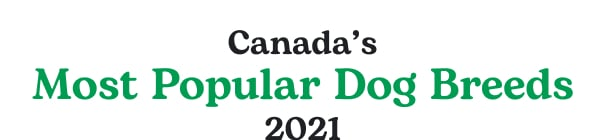Canada's Most Popular Dog Breeds 2021