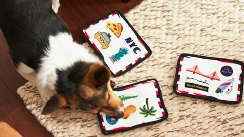 Dog plays with plush postcard toys