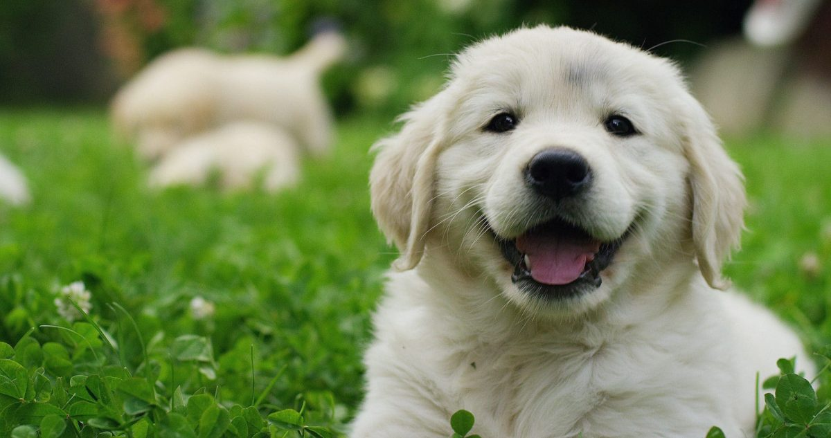 The Most Popular Puppy Breeds of 2021 - Journal Dogs