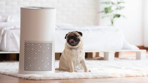 Pug next to air purifier