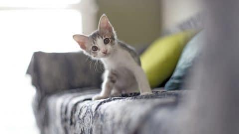 Baby kitten sitting on sofa