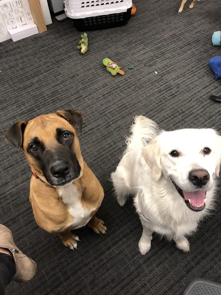 dog-friendly companies in seattle
