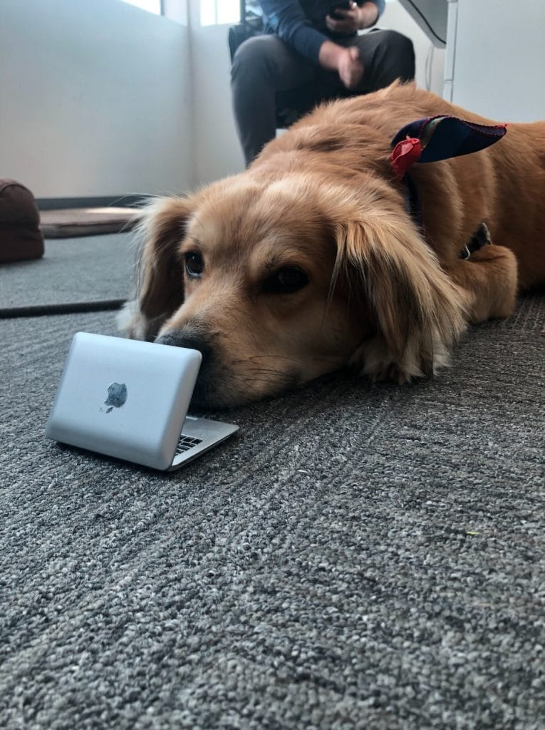 A dog with a laptop at PetDesk's San Diego dog-friendly company
