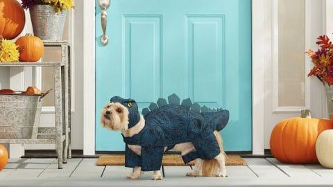 Dog in stegosaurus costume on porch