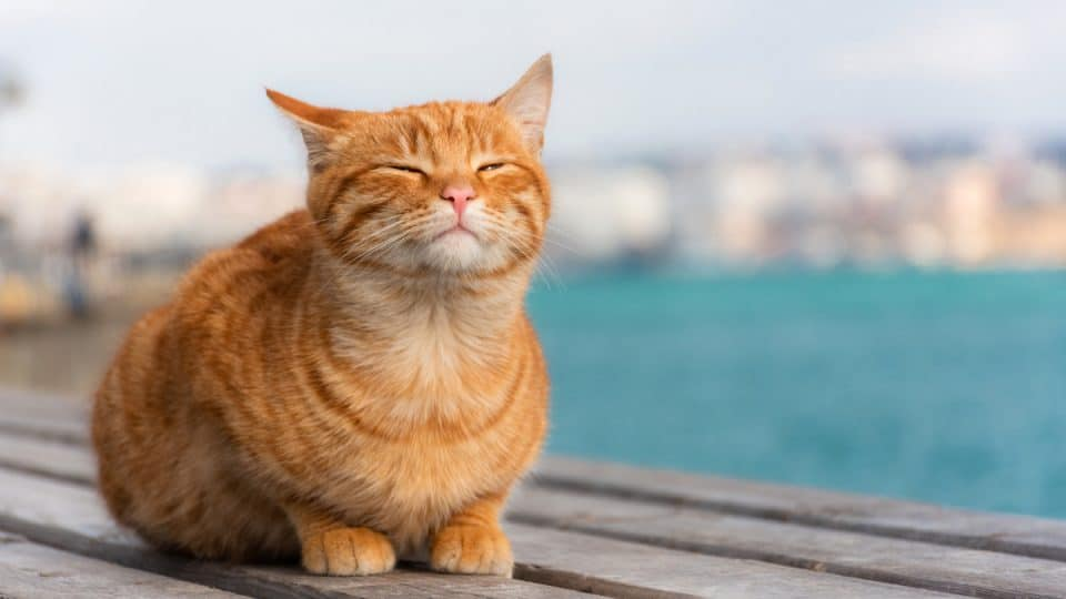 Cat sunning on roof with water in the background