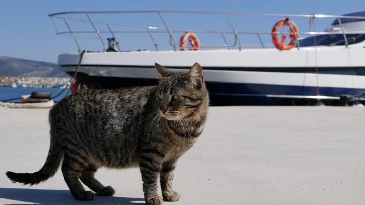 grey tabby by a yacht