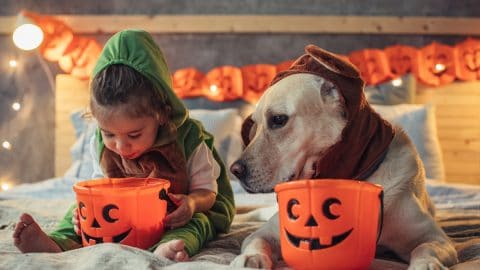 Little boy and dog examine trick-or-treat bags on bed