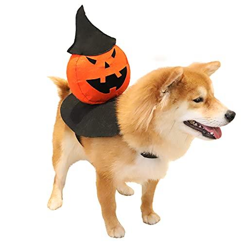 dog with pumpkin head costume on back