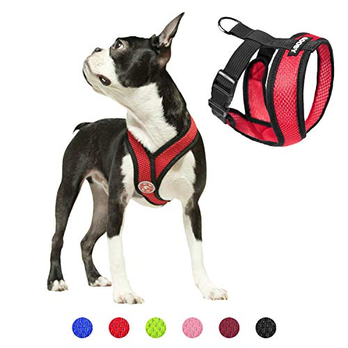 Pug wearing Gooby dog harness in red