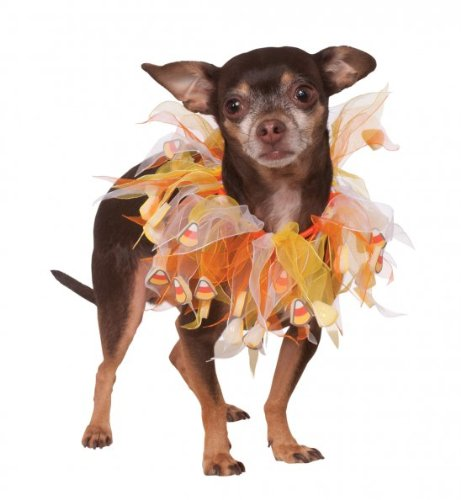 dog wearing Rubie's Fancy Candy Corn Collar with tulle pieces and little fabric candy corns